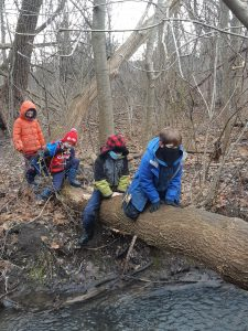 Read more about the article Forest Fun at NowLearn